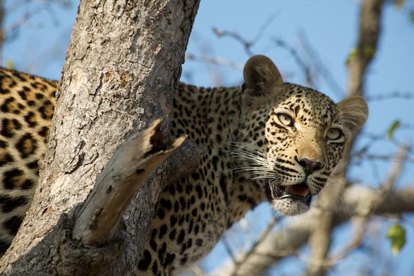 10-day-best-of-kruger-victoria-falls-chobe-safari