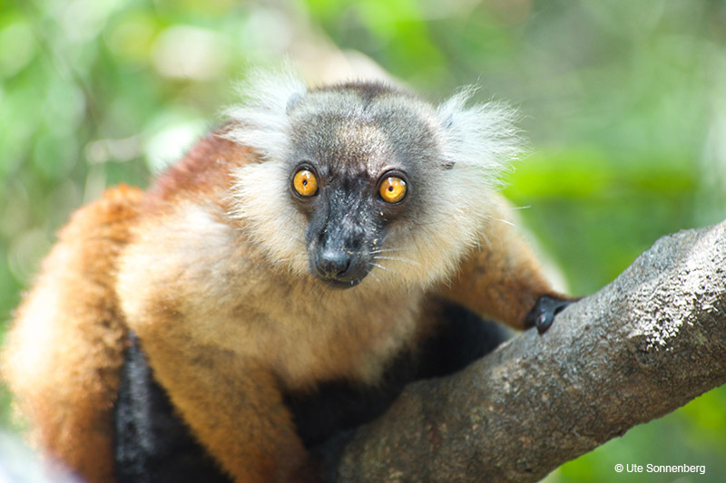 5-fun-facts-to-share-with-your-kids-on-your-madagascar-safari