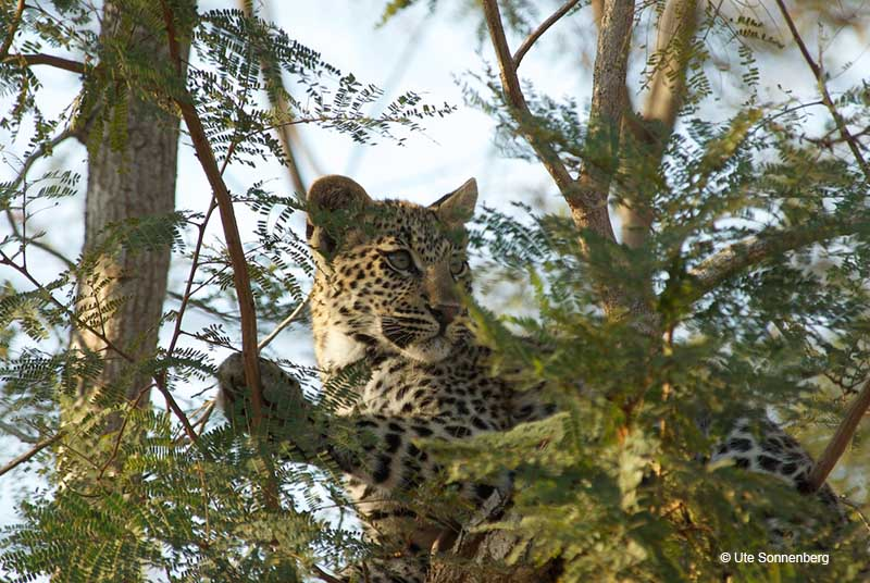 must-haves-on-africna-safari