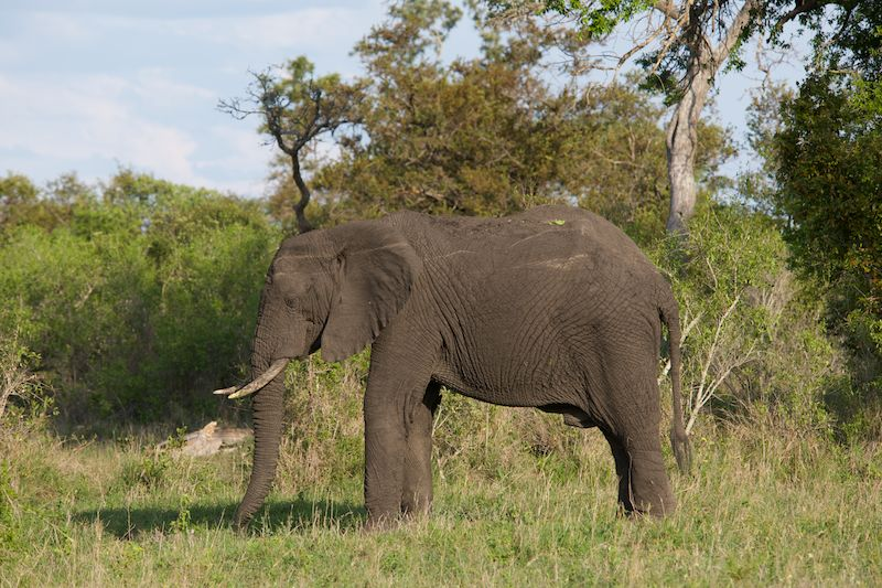 Tracking the Big Five on African Safari, part I
