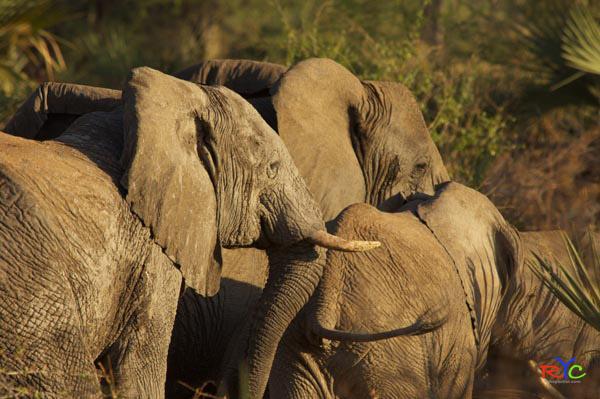 african safari holiday | Blog | travel africa