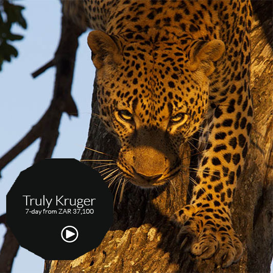 best 0f kruger safari tour